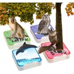 4D Card Box