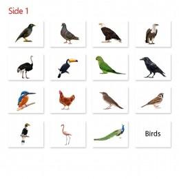 Baby Flash Cards - Birds - 16 cards